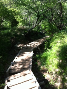 A wooden staircase in the woods